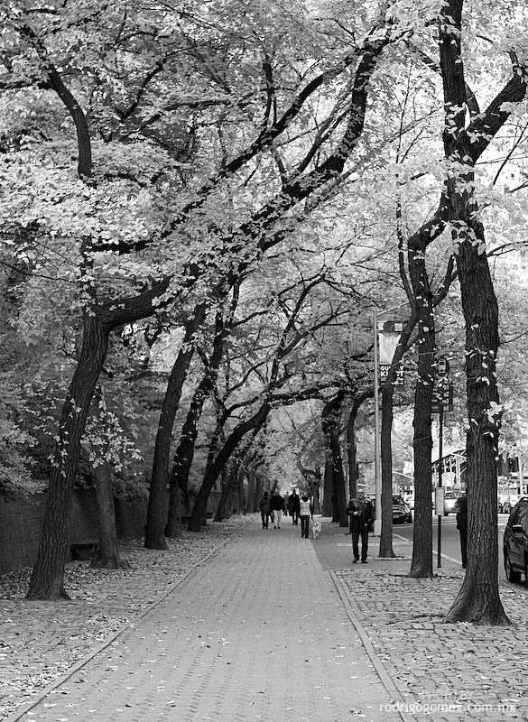 Central Park - 5th Av I