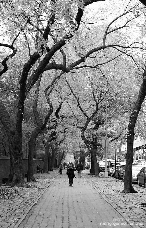 Central Park - 5th Av II