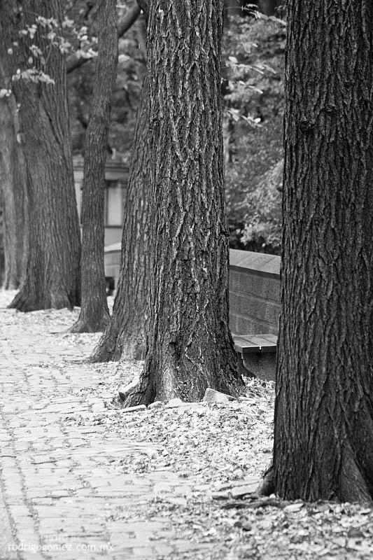 Central Park - 5th Av III