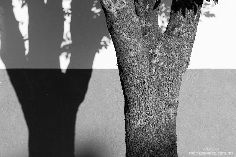 Impresiones en Blanco y Negro III