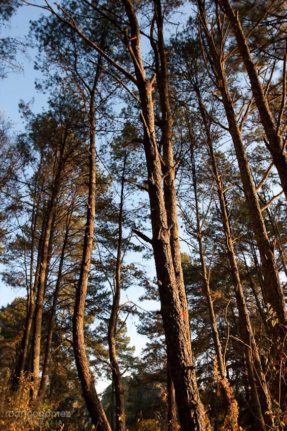 Zirahuén IX - Woods