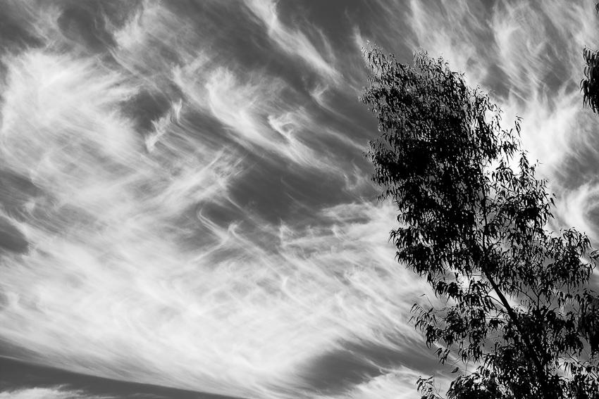 Sky & Tree