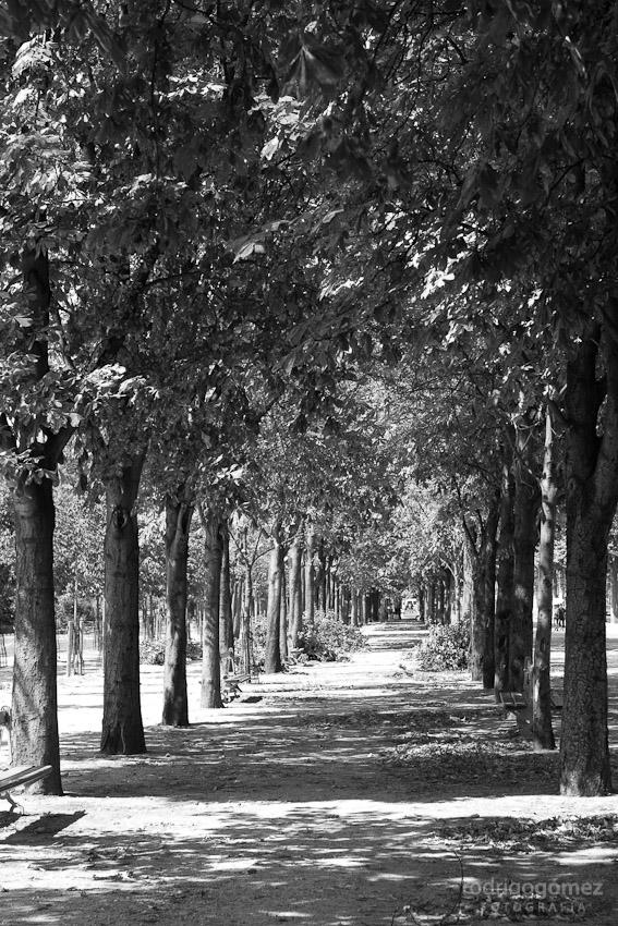 Champs-í‰lysées I