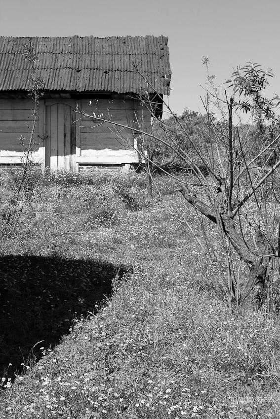 Zirahuén Noviembre 2009 IV