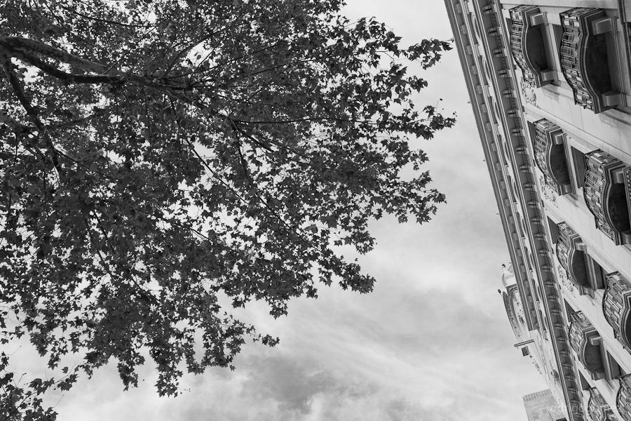 Arce y balcones - Barcelona