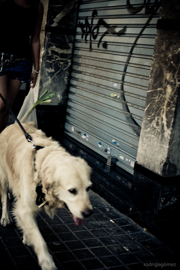 El perro - Barcelona
