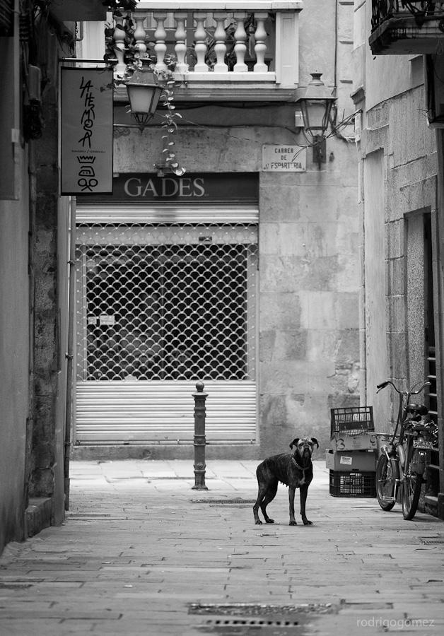 El perro en el callejí³n - Barcelona