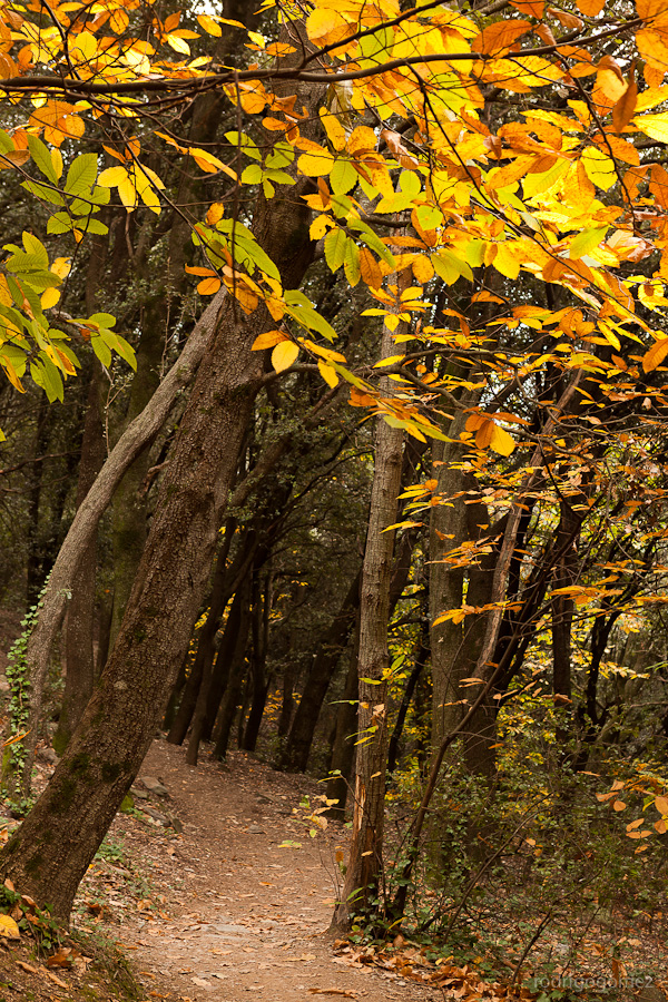 Parc Natural del Montseny III - Barcelona