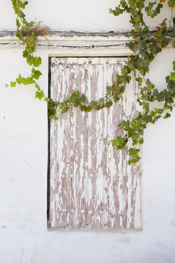 La ventana y las hojas - Granada