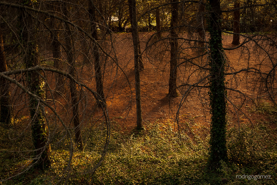 Lost in the Woods - Montseny V