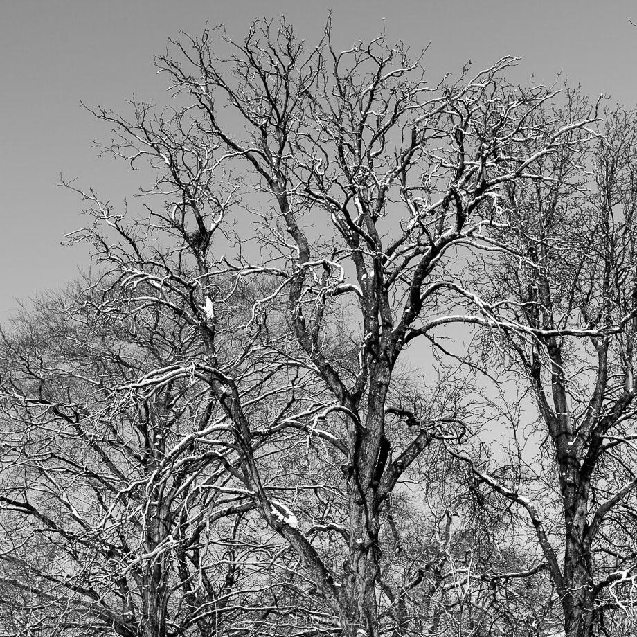 After the snow X - Amsterdam, Holanda
